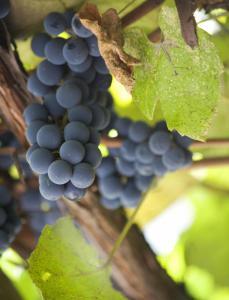 Vigne Da Pietro-Restaurant